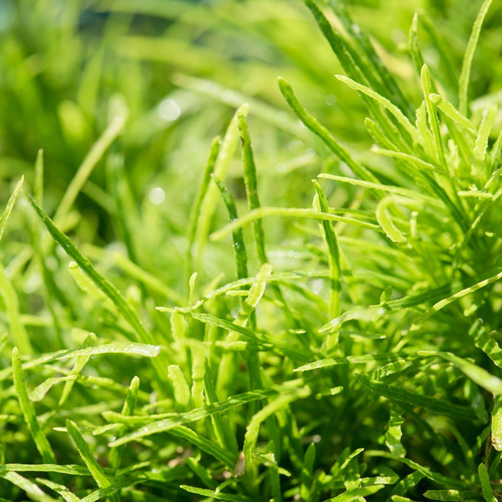 Go Green to Improve Employee Satisfaction and the Bottom Line